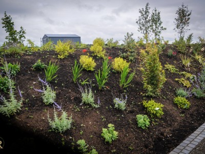 Extensive planting